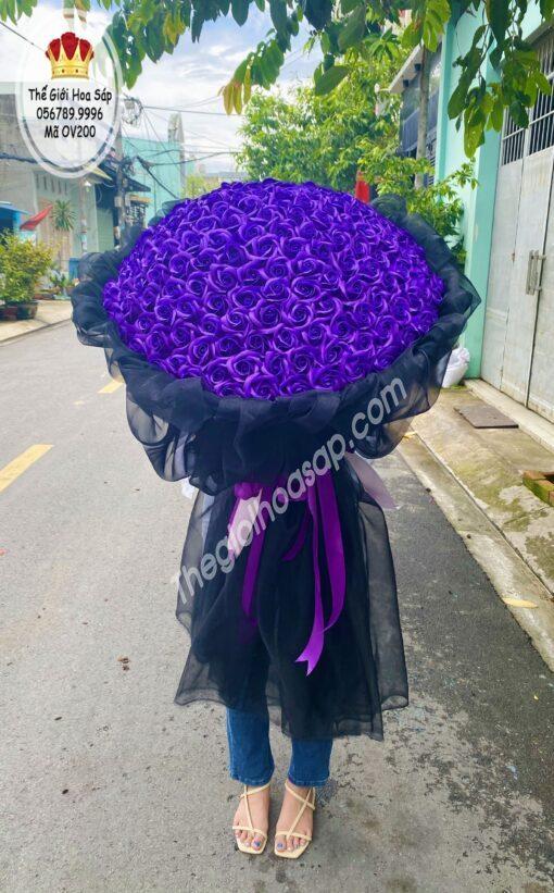 hoa sap 199 bông